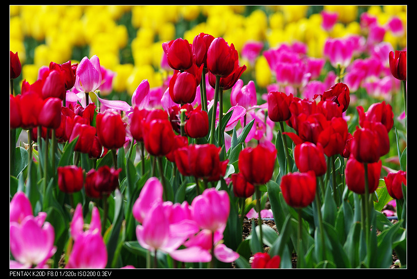 2011/03/06 觀霧觀霧 Pentax DA* 300mm f4!