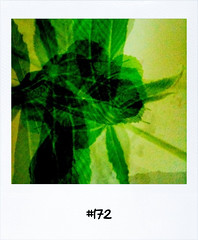 "#Dailypolaroid #172 #fb • <a style=""font-size:0.8em;"" href=""http://www.flickr.com/photos/47939785@N05/5509056735/"" target=""_blank"">View on Flickr</a>"