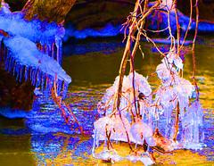 DSC_0406 river thaw_1_edited-3 (ctberney) Tags: ontario canada thaw stratford avonriver signofspring