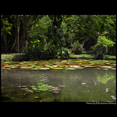 Garden of Enlightenment ... (juntos ( MOSTLY OFF)) Tags: garden zen lake victoriareggia nymphae nature friendship relax jardimbotanico riodejaneiro brazil solidariety musictomyeyes heartsawards flickrshearts peaceawards karmagroup speakinglove mywinners citrusaward goldstar1 brillianteyesjewels soulscapes richardsgroup magicunicornverybest thirdlife thegoldengallery asquarearists richardssilvergroup nightandmorningonflickr visionqualitygroup rulaexcelentce favetop5599 ablackrose imagesforthelittleprince richardsfloraefauna moulinrouge cherryontop sailthesevenseas focusonbeauty perceptiongroup thecubeexcellencygallery highenergyplaces thegoldenpowerclub thefriendsofelbrujo splendid gatetoparadise vernissage overtheexcellence zenenlightementgroup lizaenchantingphotogarden themasterslightpainters50 thegardenofzen imagepoetry landscapedreams exhibitionoftalent theseaoftravelsoffantasies davincimemories favouriteofmyfavourites myfave galerieomega artnetcontemporyartists davincitouch bellissima yrpreferredpicture aestheticallyperfect richards50gold amazingloveit wordsbestdazzingshots empyrianflora artfortheart anythingessentialisinvisibletotheeye joebtesgroup winnerofthebestonflickr saariysqualitypictures