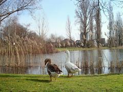 Weerfoto zaterdag 12 maart (Omroep Brabant) Tags: brabant weer omroepbrabant seizoenen weerfotos weerfoto wwwomroepbrabantnl brabantseseizoenen