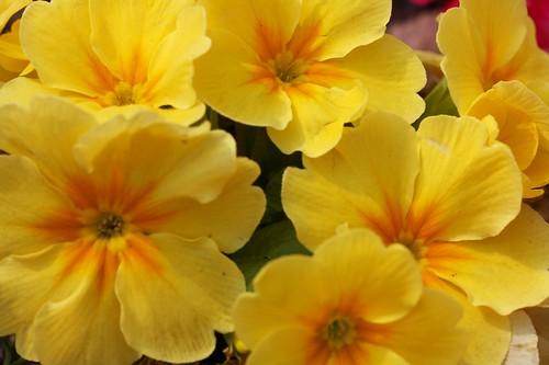 春 / Happy spring