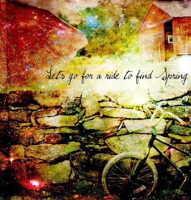 enchanting bicycle