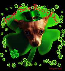 Happy Saint Paddy's Day (faith goble) Tags: ireland irish dog pet chihuahua green art hat saint photoshop miniature artist photographer kent