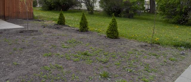 bungalow.frontyard.weeds.834
