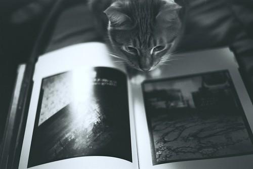 フリー写真素材, 動物, 哺乳類, ネコ科, 猫・ネコ, モノクロ写真,