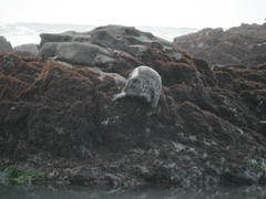 Seal (camera_shy) Tags: