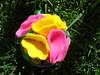 Flor veraniega (mis_manitas) Tags: flor tela paño kanzashi lenci género