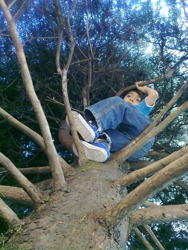 En el pino