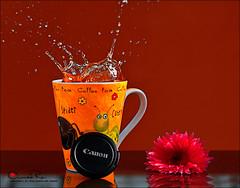 Splash  ♥ (Abeer Hussein) Tags: canon splash تصوير التصوير ورشة 450d كانون ترايبود كاميرة سبلاش