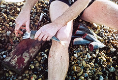 horse mackerel decapitation (lomokev) Tags: sea fish beach dead mackerel nikon killing head stones leg agfa ultra horsemackerel agfaultra nikonos superdave decapitation deletetag nikonosv nikonos5 nikonosfive davesawyers