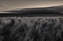 Stars, Clouds and Grass (Ivan Sorensen | www.ivansorensenphotography.com) Tags: morning winter light sky blackandwhite lake ontario canada cold beach water monochrome clouds stars landscape dawn nikon natural bright horizon hamilton hfg d90 niksoftware capturenx2 nikcep