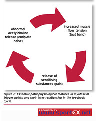 Essential pathophysiological features in myofascial trigger points and their inter-relationship in the feedback cycle. (sportEX journals) Tags: muscles sportex sportsinjury sportexdynamics sportsrehabilitation myofascialtriggerpoints