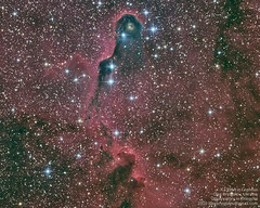 IC1396 in Cepheus (Oleg Bryzgalov) Tags: astrophoto cepheus ic1396 Astrometrydotnet:status=solved Astrometrydotnet:version=14400 Astrometrydotnet:id=alpha20110131476194