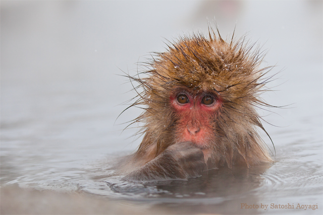 hot spring in monkey