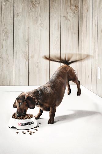Purina-The-Dog