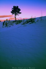 A tree with cold morning (waltersoluh) Tags: snow tree nature sunrise landscape rs winterscape fineartphotos theunforgettablepictures artofatmosphere qualitysurroundings redmatrix magicunicornverybest adriënnesmagicalmoments