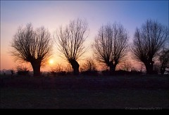 The road not taken. (Cassius Klay) Tags: sunset zonsondergang willows goldenhour wilgen waaldijk goudenuurtje cassiusphotography2011 2912011