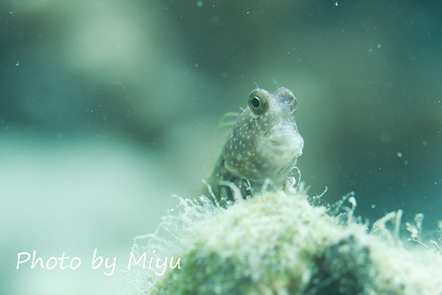 Hello blenny!