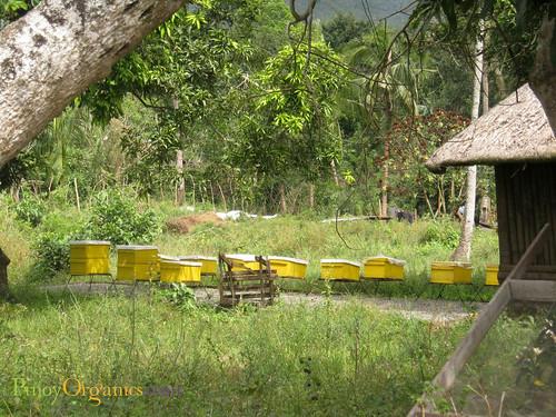 Hacienda San Benito-royal apiary