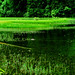 Arrow Bamboo Lake (箭竹海, Jiànzhú Hǎi)