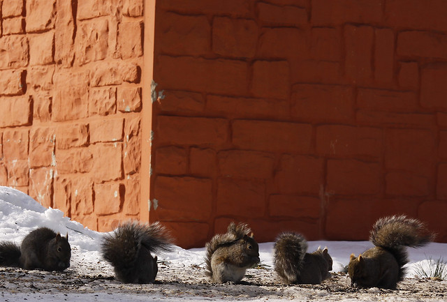 squirrel buffet