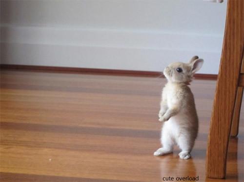 복든 토끼가 찾아와도 놀라지..