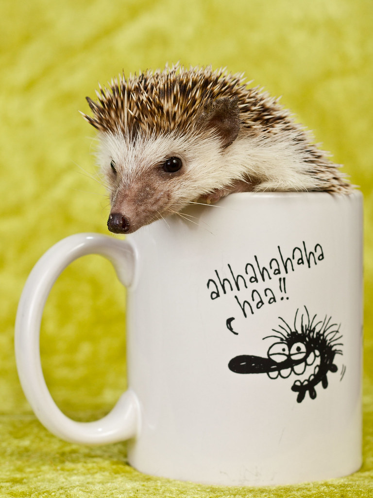 Nöpö in the cursing hedgehog mug