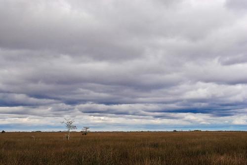 2011 02 06 Everglades-5