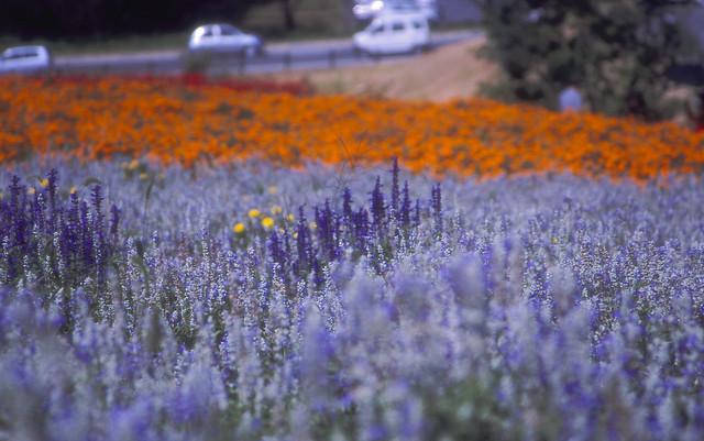 花畑のフリー写真素材