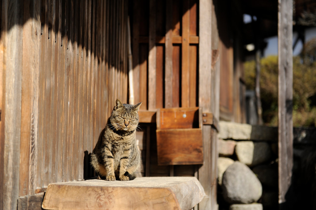 20110123 Tsumago 10 (Half asleep) by BONGURI, on Flickr