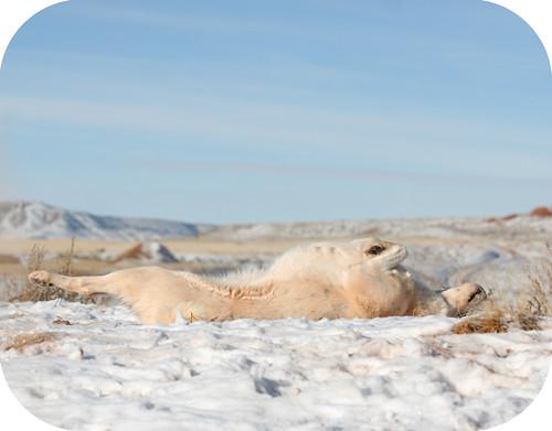 snowbathing1