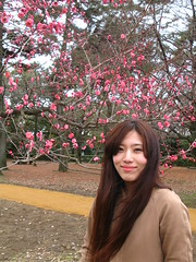 IMG_7556 (Michael Lambe) Tags: kyoto ume plumblossom gosho  imperialpalacegardens