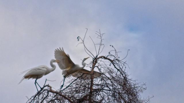 48/365: Wings