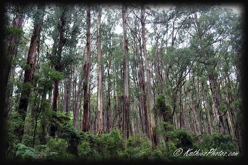 Trees of Kallista