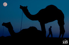 camel-k-night (jas-B) Tags: travel moon india man night photographer dslr pushkar camels fare rajasthan bluemoon ajmer dfc catal pushkarmela nikond90 delhigroup unseenindia delhifotographyclub