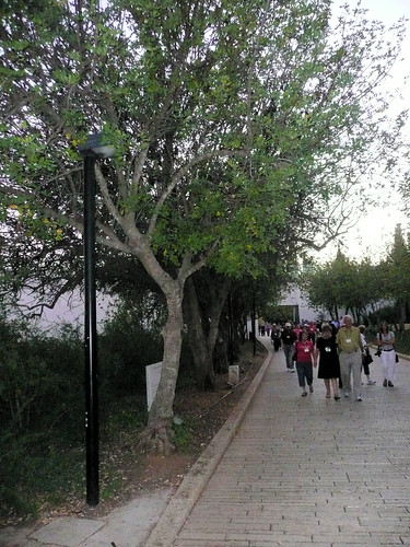Yad Vashem-Avenue of the Righteous