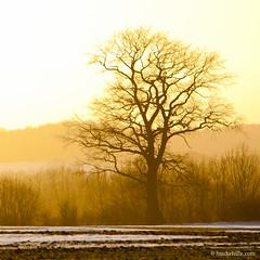 Days Are Getting Longer Once More (H. Hille) Tags: schnee sunset snow ice field catchycolors germany landscape deutschland melting sonnenuntergang feld german eis landschaft deutsch schleswigholstein eutin ostholstein schmelzen canonef70200mmf28lisusm canoneos1dmarkiii ef70200mmf28lisusm20x canonextenderef2xii