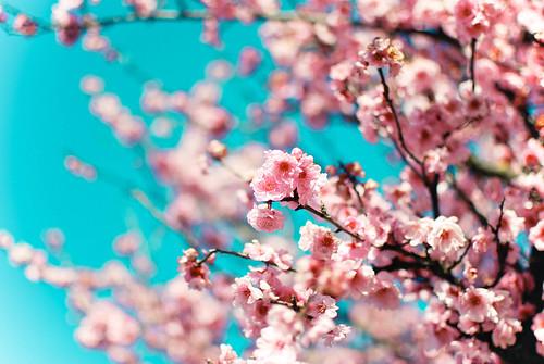 spring4-0154