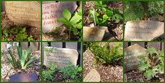 Etowah Indian Mounds State Park, GA/Medicinal Wild Plant Display