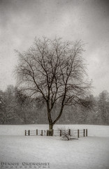 Snowstorm Solitary -HDR- (5six7 Photography) Tags: snowflake snow snowstorm white winter xti rebel photomatix nh newhampshire newengland hdrsoft hdr highdynamicrange field empty eos dslr desolate clouds cloudy cold canonites canon american america 400d 2470lf28 2470l 2470f28l 2011 february