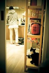 裝飾品偽裝 (*嘟嘟嘟*) Tags: cat 貓 菇嚕嚕