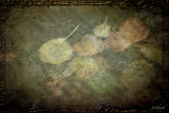 Decadence (Franco DAlbao) Tags: leaves composition hojas floating textures otoo texturas decadence autmn decadencia composicin flotando dalbao francodalbao