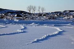 Sparse Winter Archipelago © Rob Watkins 2011 (Aland Rob) Tags: trees winter sea snow cold tree ice beach strange suomi finland weird shapes cover sheet icy finnish archipelago jurmo