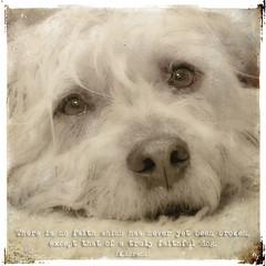 portrait dog closeup eyes quote joey glenn free hond cc terrier creativecommons ogen portret lorenz simplybeautiful imaal freetouse snoet glenofimal magicunicornverybest