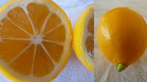 filet de sabre pané et risotto encre de seiche et citron meyer