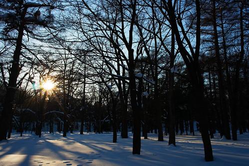 in the Maruyama Park, Sapporo