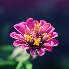 Garden Flower no.1 (Stephen Symons) Tags: flower macro nature 50mm sigma squareformat postprocessing