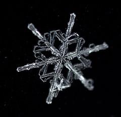 Snowflake (schaetz) Tags: snowflake macro lens nikon texas reverse d90