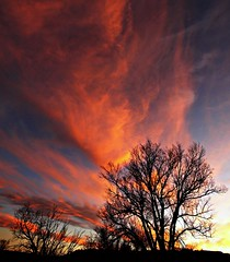 Colores (Ph0tomas) Tags: trees sunset sky newmexico colors clouds sunrise landscape lumix g g1 bushes f4 socorro 714 vario mygearandme ph0tomas
